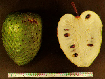 Picture of soursop fruit, Annona muricata